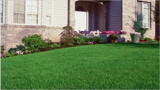 grass around home
